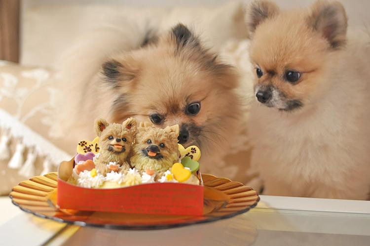 ポメラニアンの誕生日ケーキ