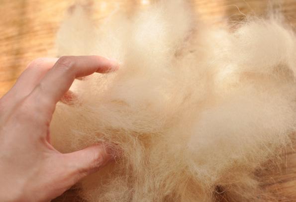 ポメラニアンの抜け毛の量